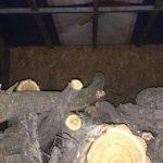 Возле Апостолово мужчина вырубил деревьев на большую сумму