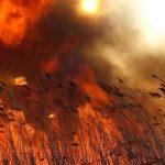 В Никополе в бухте неизвестные подожгли камыш