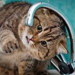 По причине ремонтных работ в Никополе отключили воду