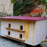 «Кошачье общежитие» появилось в Никополе