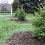 Первую партию елок, кленов и сакуры высадили в Никополе