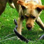 Собаку укусила змея в поселке под Никополем